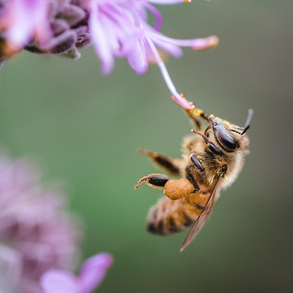 Biene angepasst